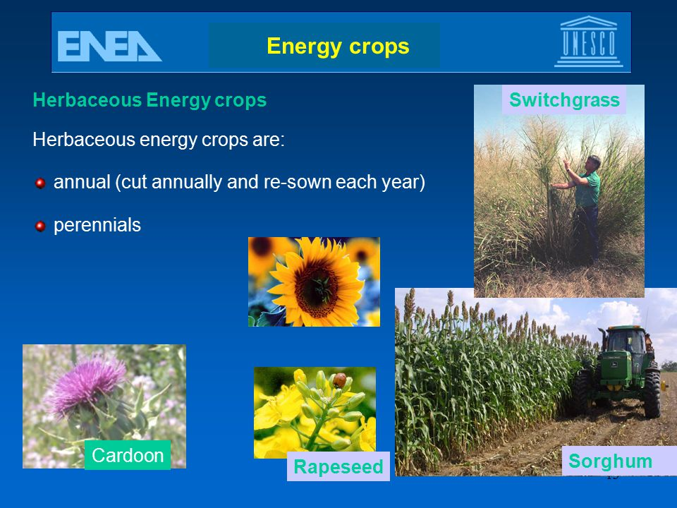 Energy crops Herbaceous Energy crops Herbaceous energy crops are: