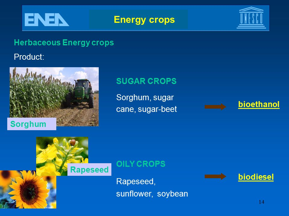 Energy crops Herbaceous Energy crops Product: SUGAR CROPS