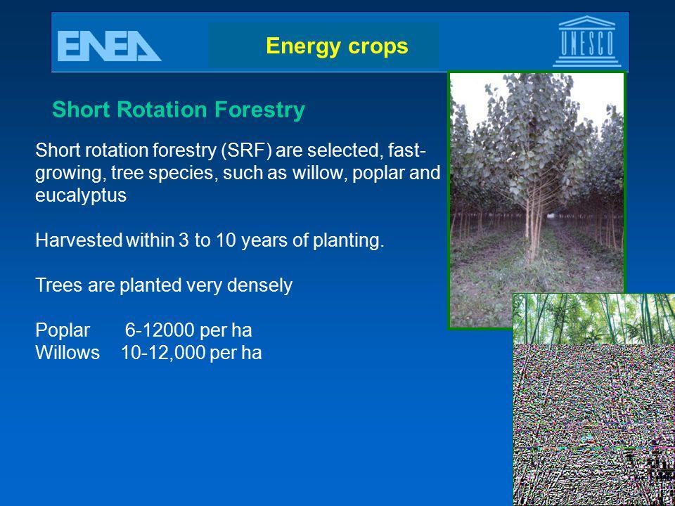 Short Rotation Forestry