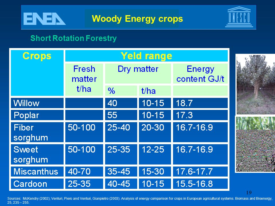 Woody Energy crops Short Rotation Forestry