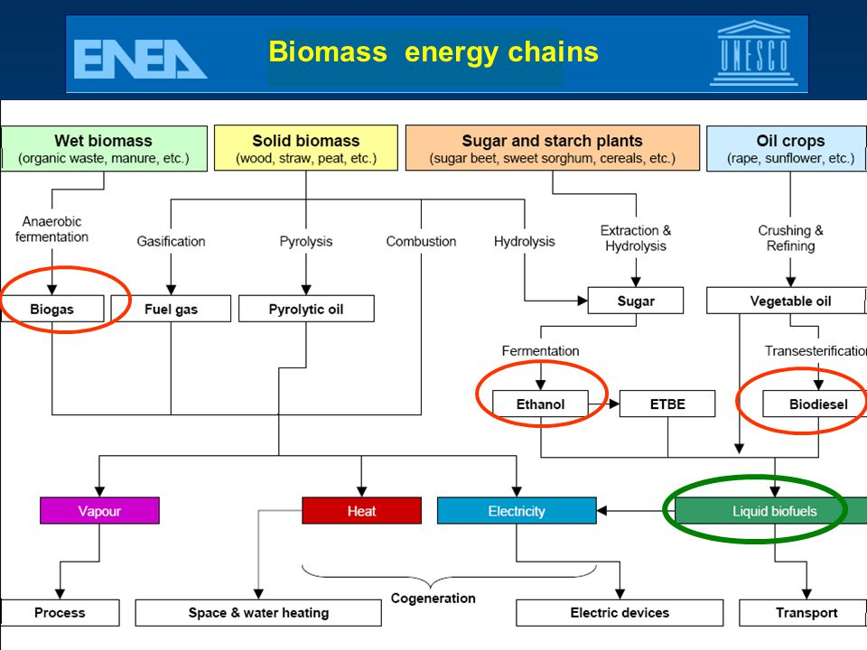 Biomass energy chains