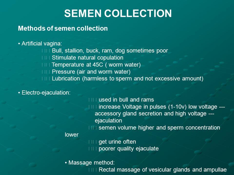 SEMEN COLLECTION Methods of semen collection Artificial vagina: