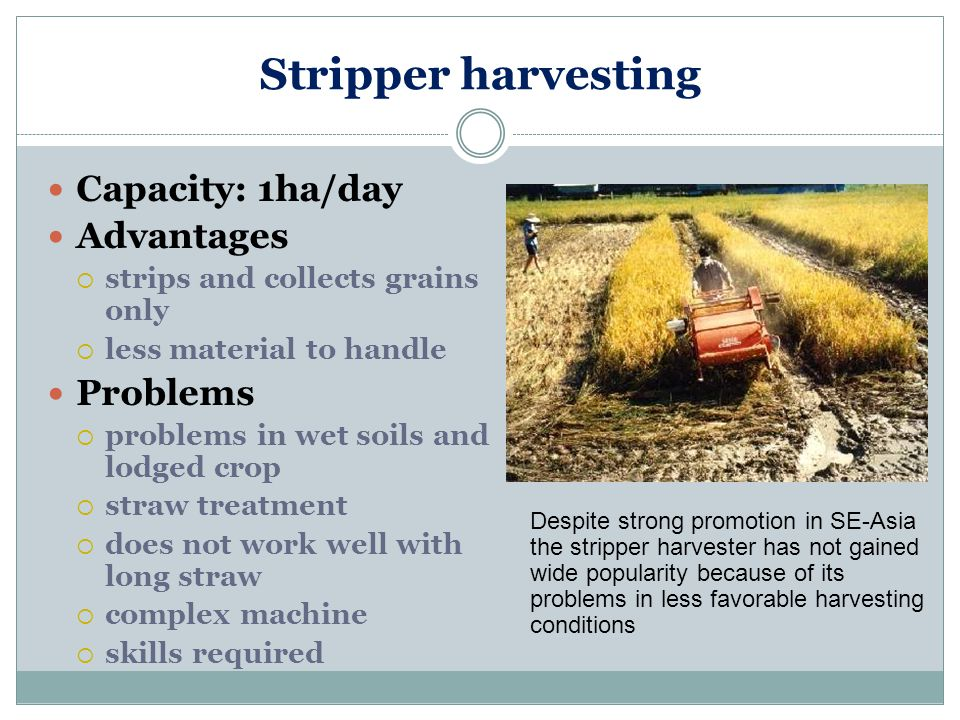 Stripper harvesting Capacity: 1ha/day Advantages Problems