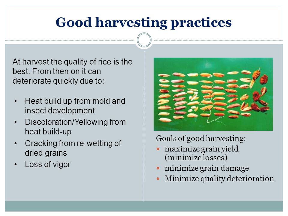 Good harvesting practices