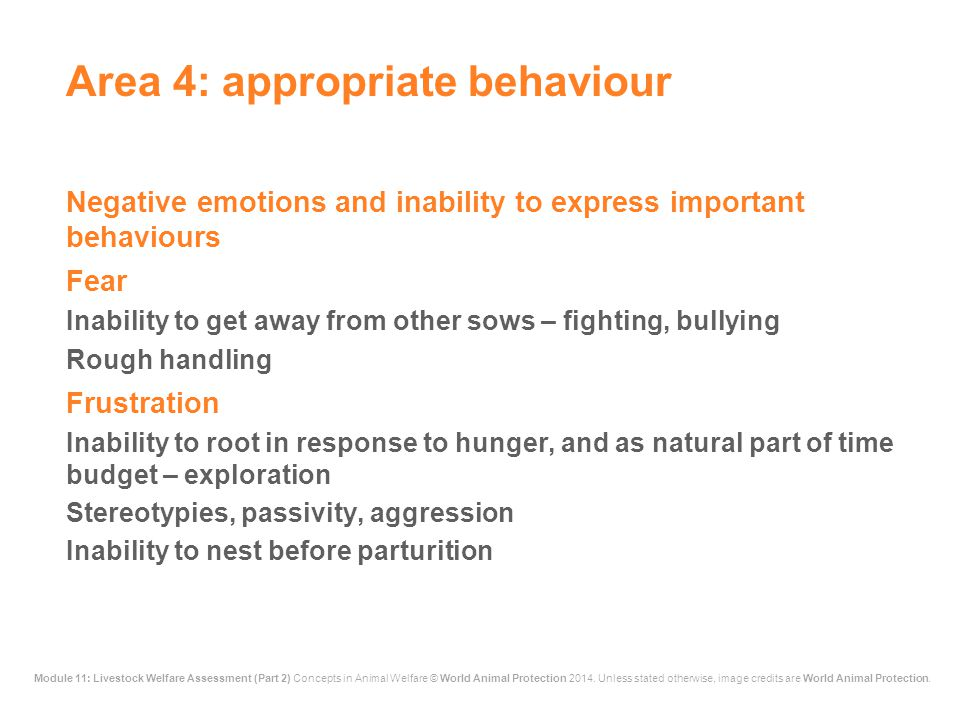 Area 4: appropriate behaviour