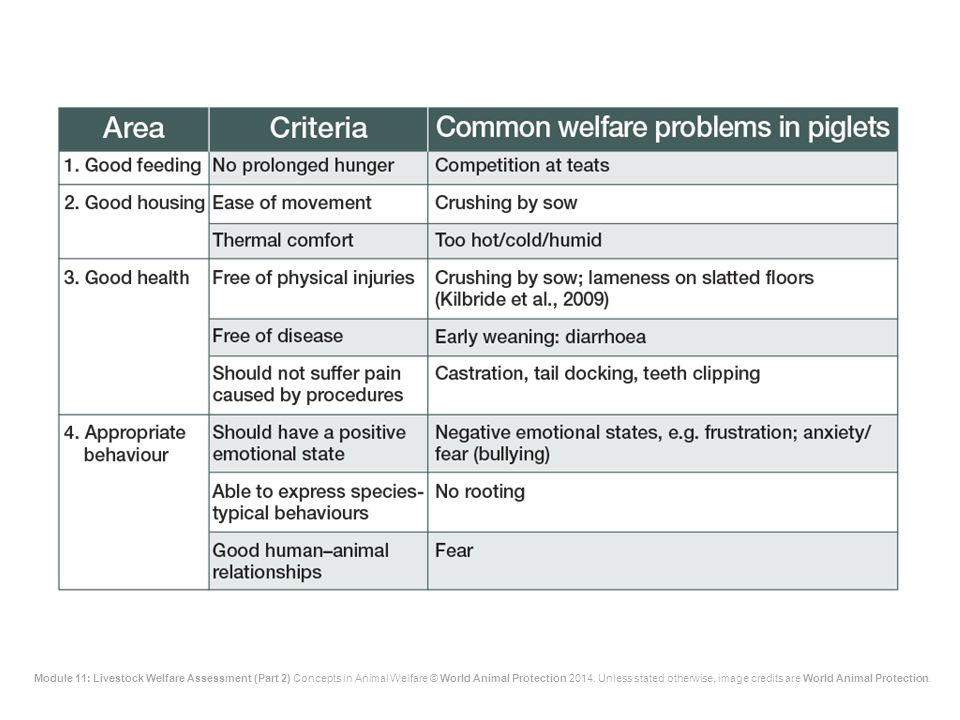 The main welfare problems in piglets are shown on the slide
