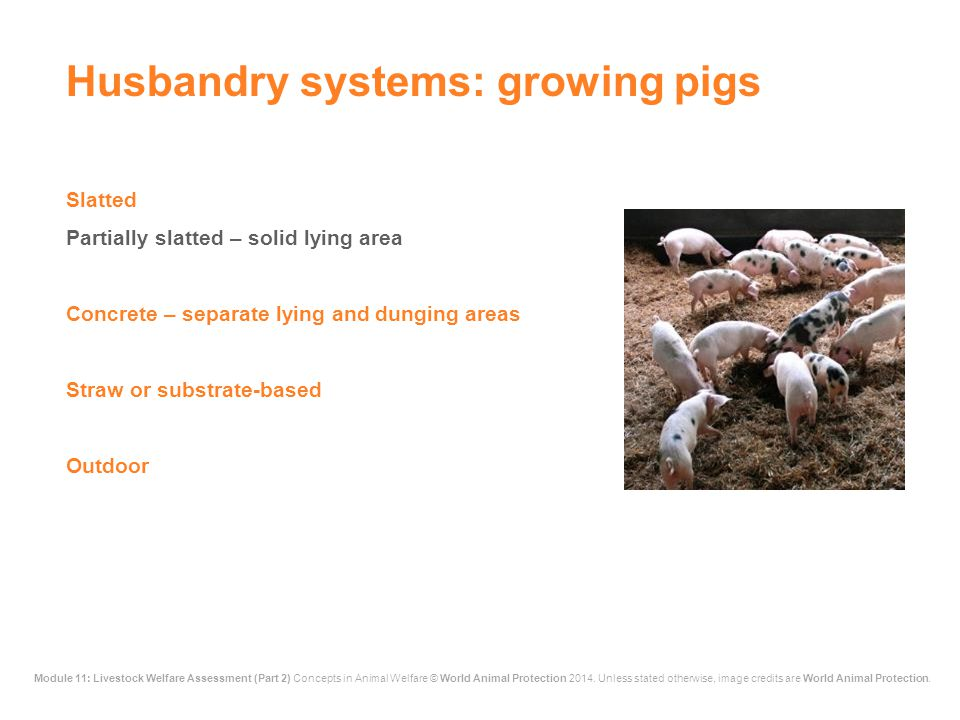 Husbandry systems: growing pigs
