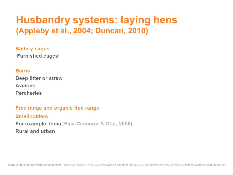 Husbandry systems: laying hens (Appleby et al., 2004; Duncan, 2010)