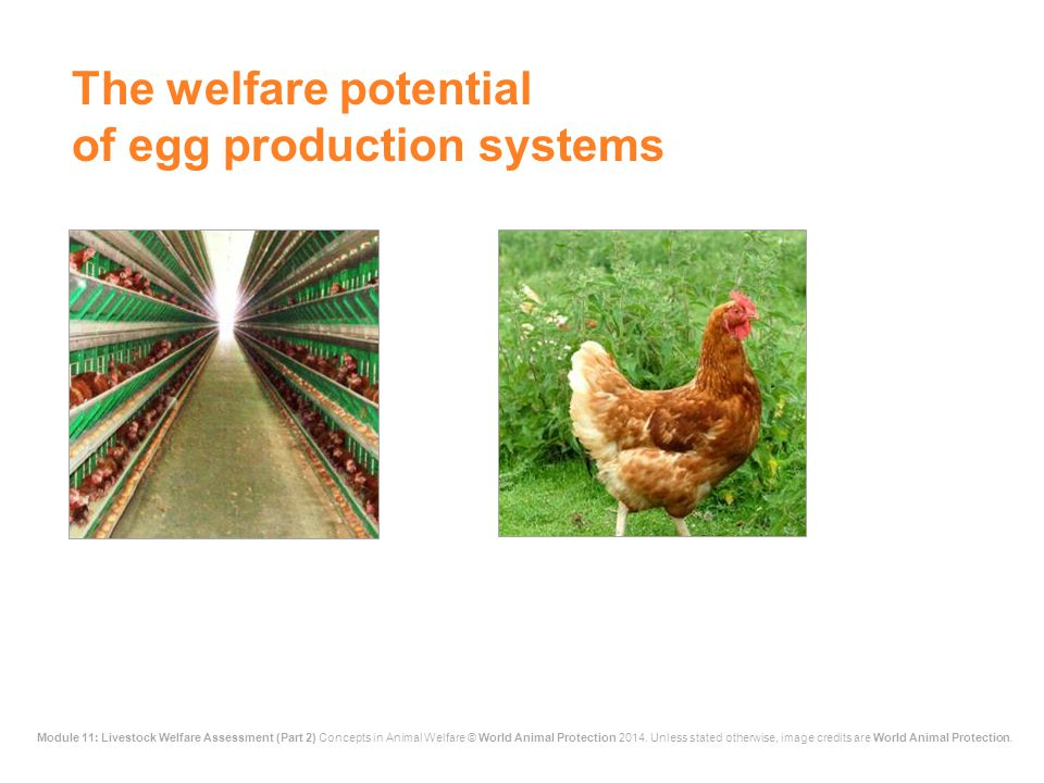 The welfare potential of egg production systems