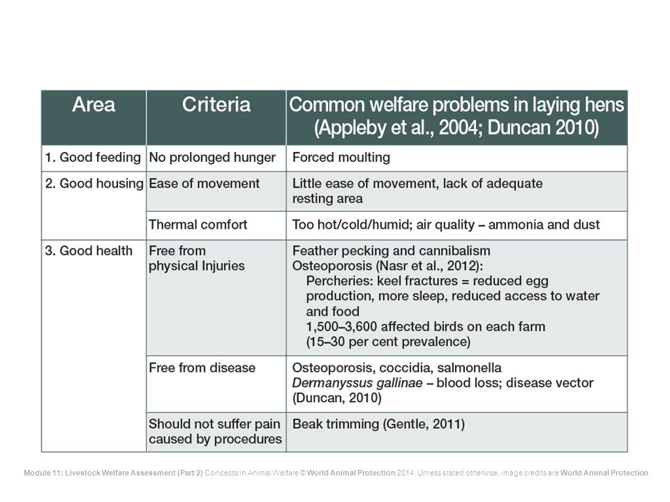 The main welfare problems in laying hens in the various high-production systems are shown on the slide.