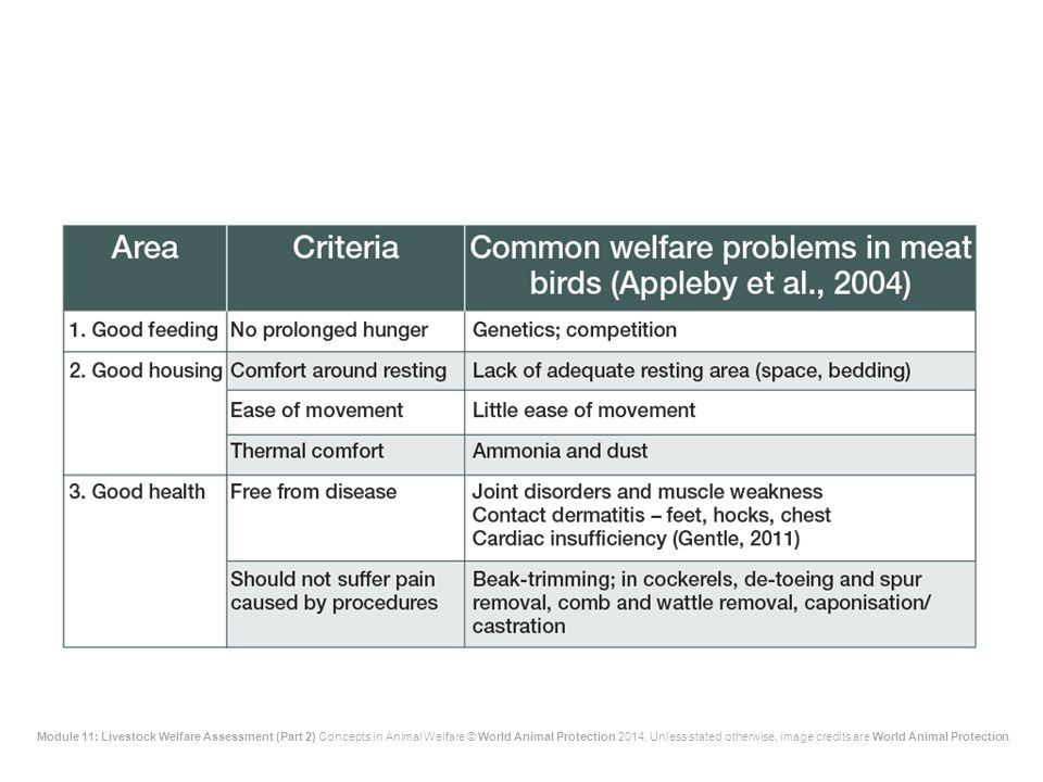 The main welfare problems are shown on the slide.