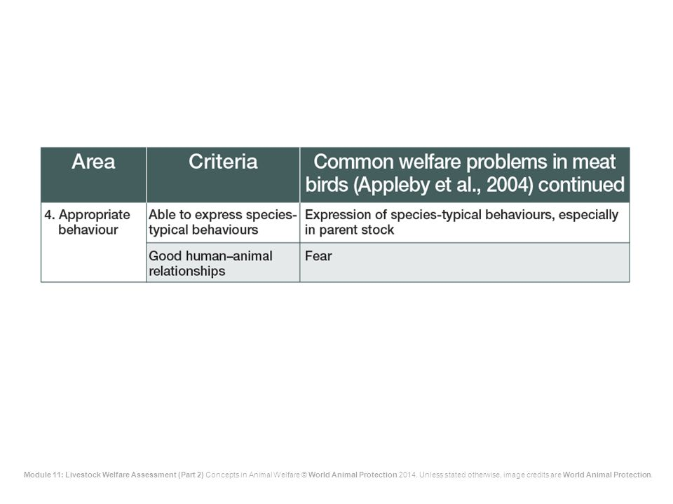 The fourth area of welfare concern, appropriate behaviour, is an area of relatively low concern in meat birds because they do not undergo the movement, transport and mixing that pigs and cattle do, and because in their short lives they do not go through different stages of maturity with different environmental needs. Even so, the over-simple housing typical of commercial conditions limits behaviour, and this is even more important for breeding stock.