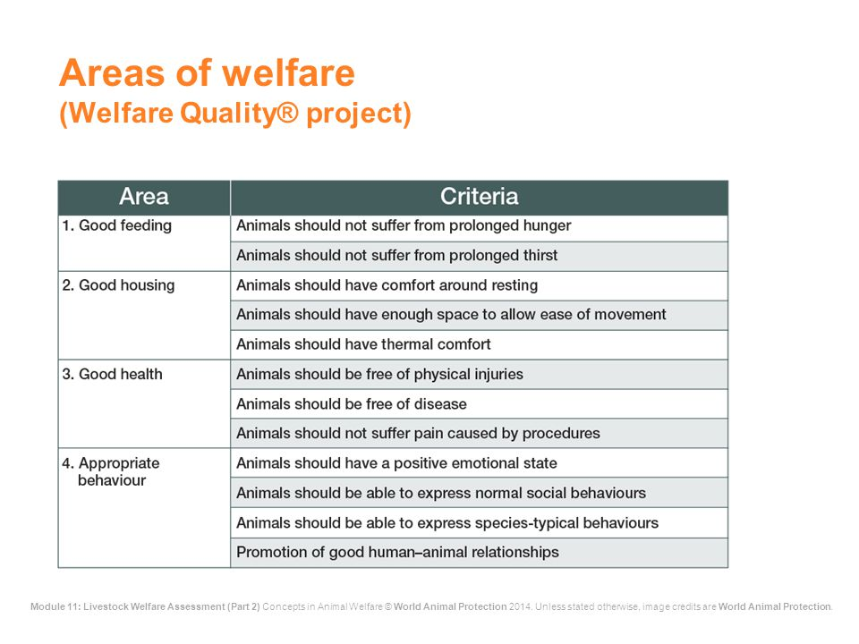 Areas of welfare (Welfare Quality® project)