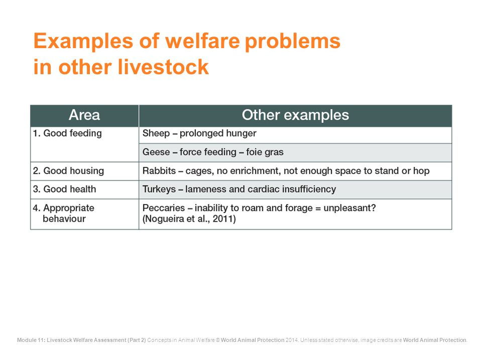 Examples of welfare problems in other livestock