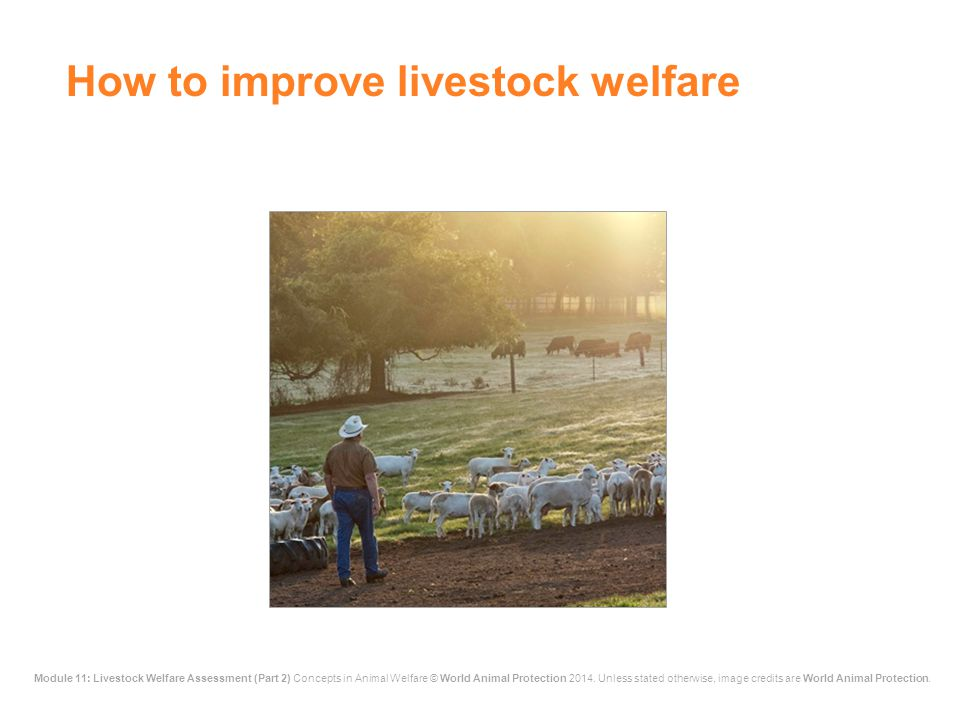 How to improve livestock welfare