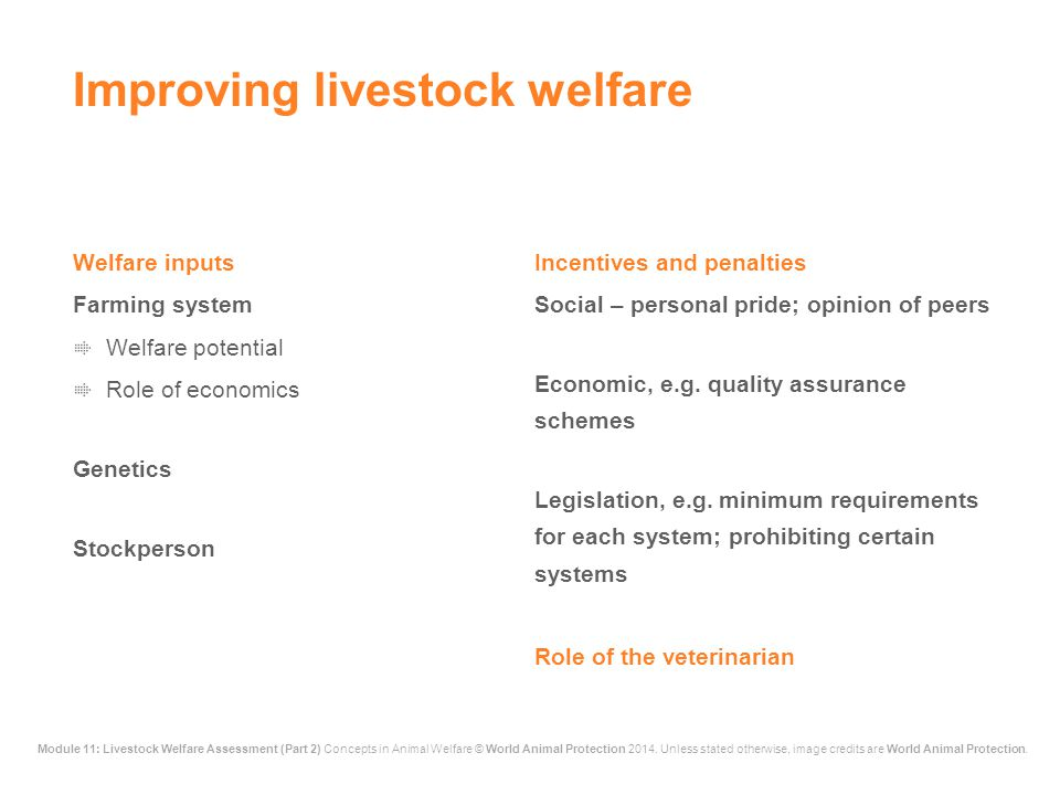 Improving livestock welfare