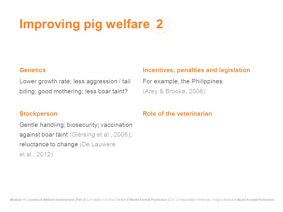 Improving pig welfare 2 Genetics Incentives, penalties and legislation