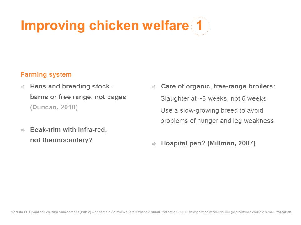 Improving chicken welfare 1