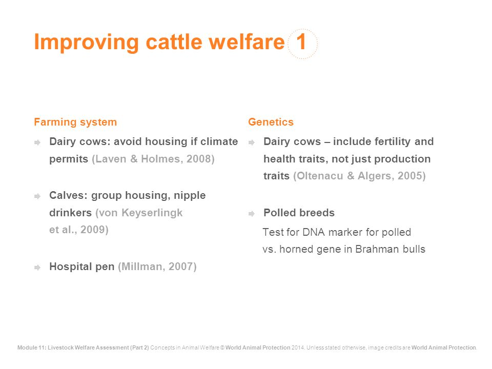 Improving cattle welfare 1