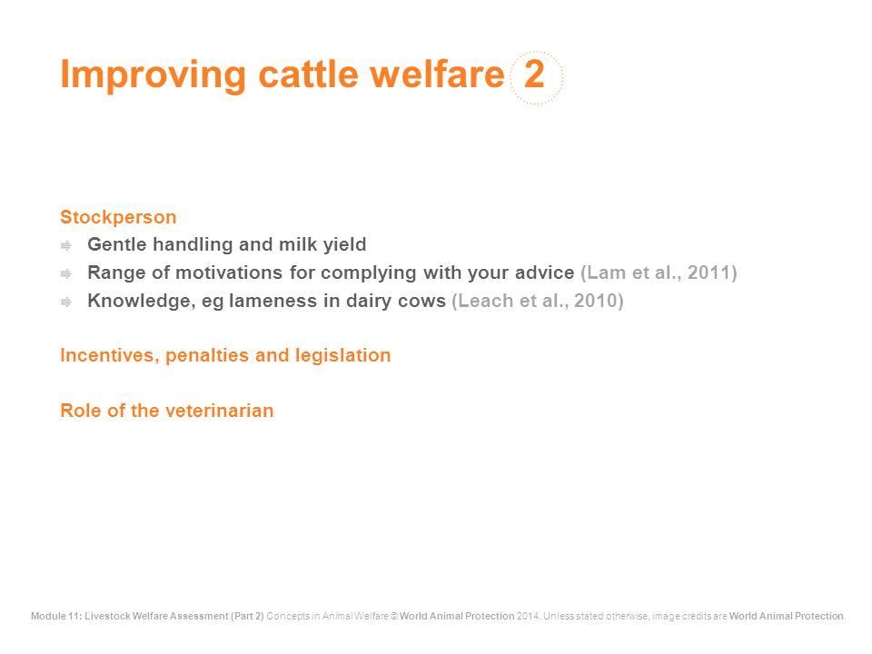 Improving cattle welfare 2