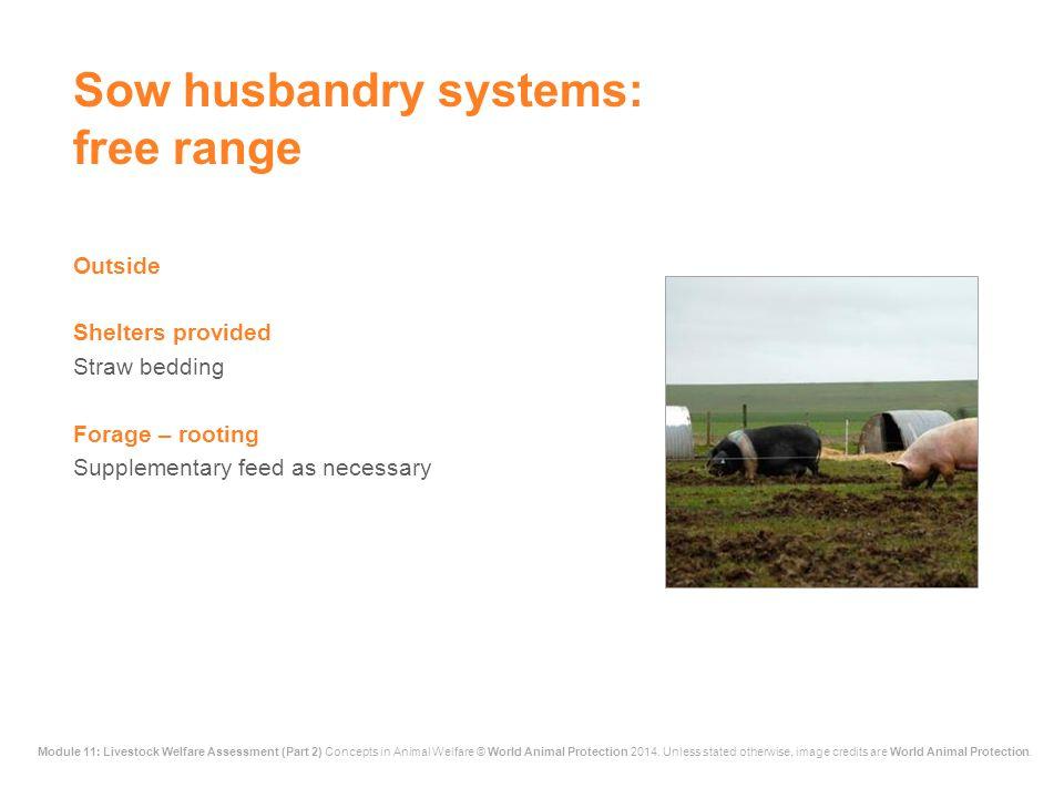 Sow husbandry systems: free range