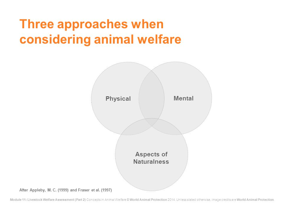 Three approaches when considering animal welfare