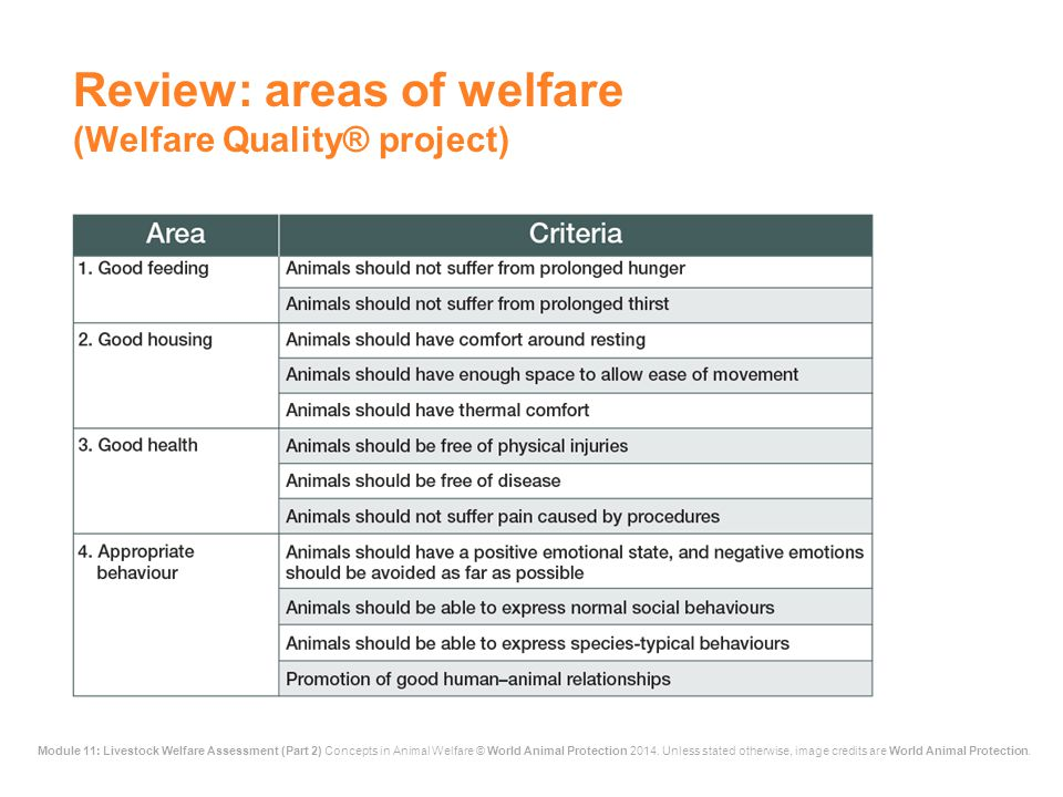 Review: areas of welfare (Welfare Quality® project)