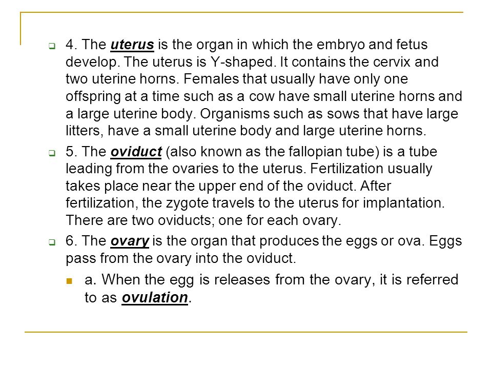 4. The uterus is the organ in which the embryo and fetus develop