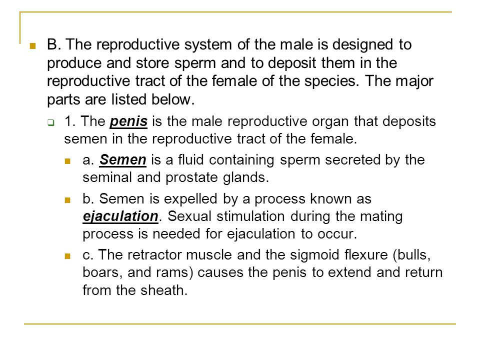 B. The reproductive system of the male is designed to produce and store sperm and to deposit them in the reproductive tract of the female of the species. The major parts are listed below.