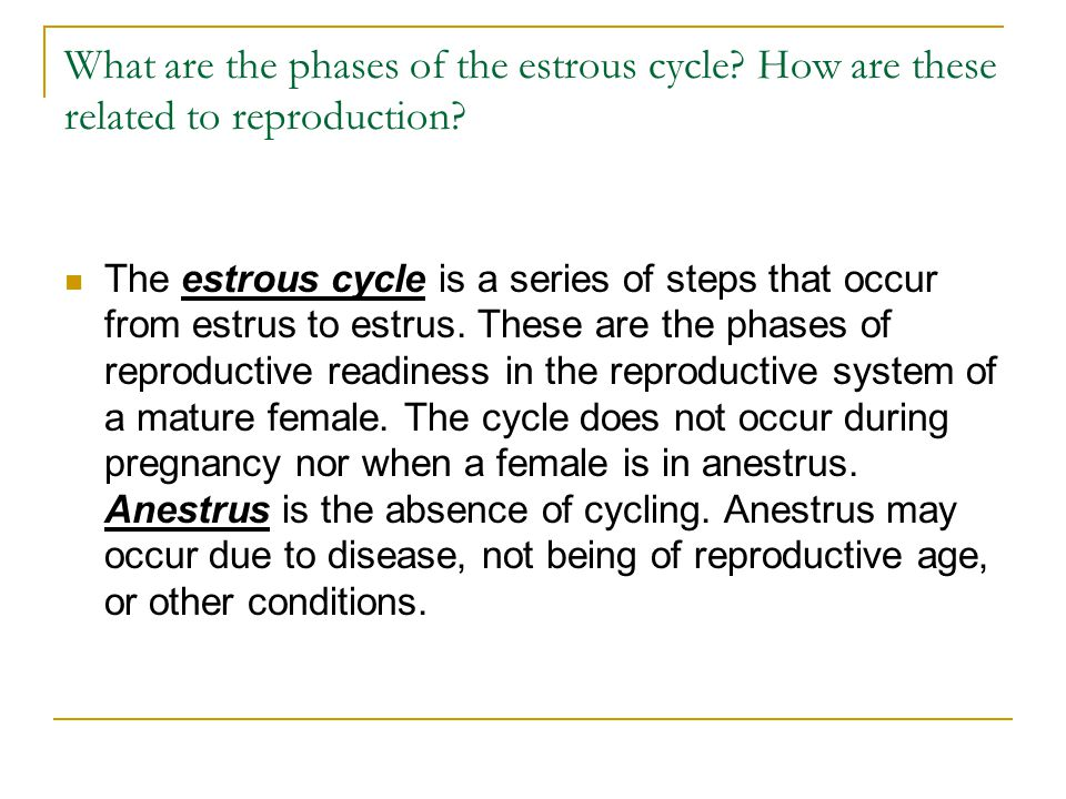 What are the phases of the estrous cycle