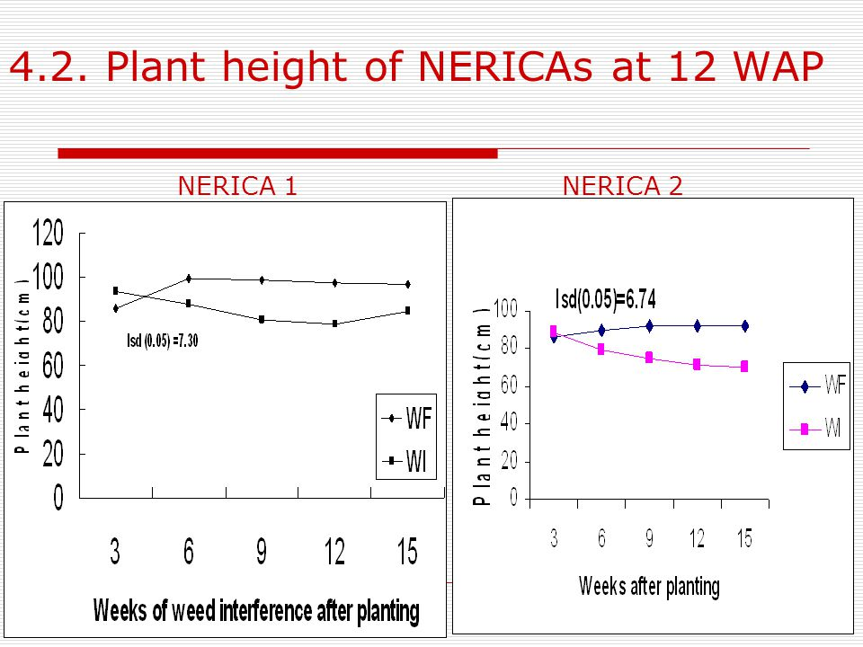 4.2. Plant height of NERICAs at 12 WAP