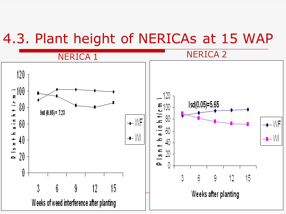 4.3. Plant height of NERICAs at 15 WAP