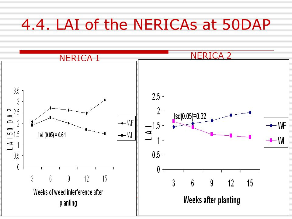 4.4. LAI of the NERICAs at 50DAP