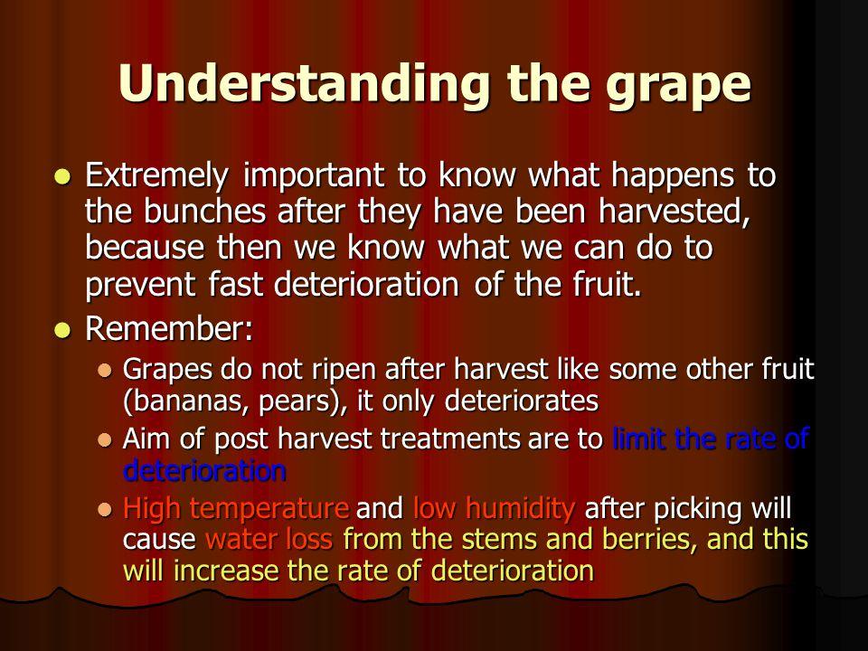 Understanding the grape