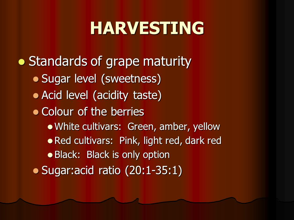 HARVESTING Standards of grape maturity Sugar level (sweetness)