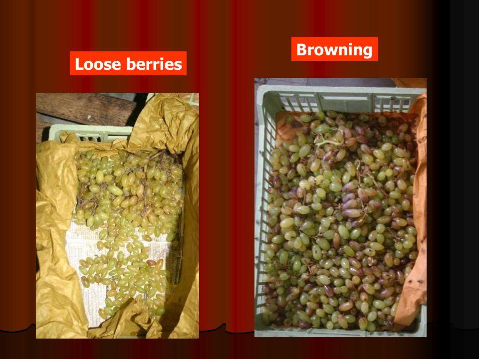 Browning Loose berries