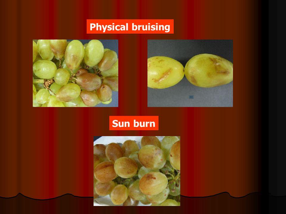 Physical bruising Sun burn
