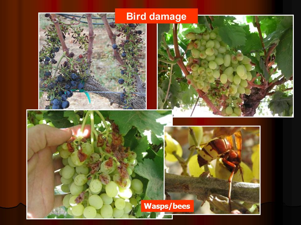 Bird damage Wasps/bees