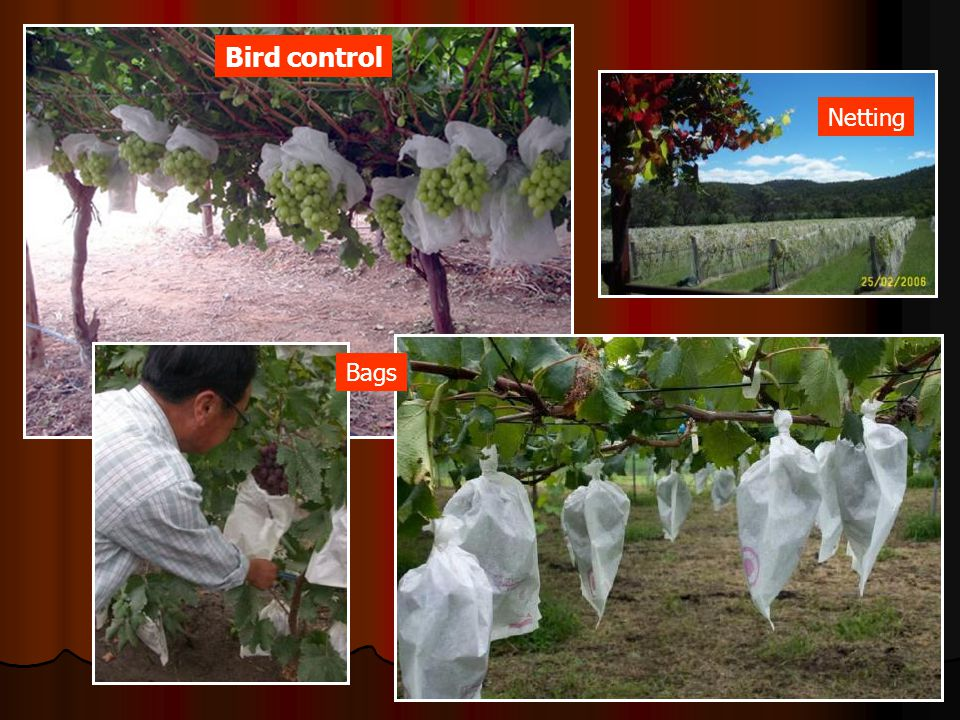 Bird control Netting Bags