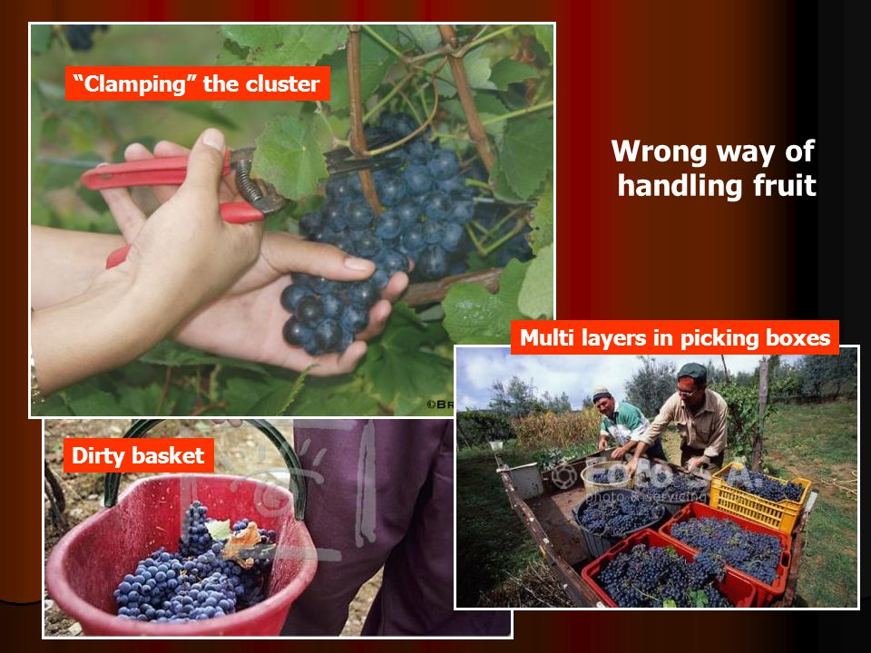 Wrong way of handling fruit
