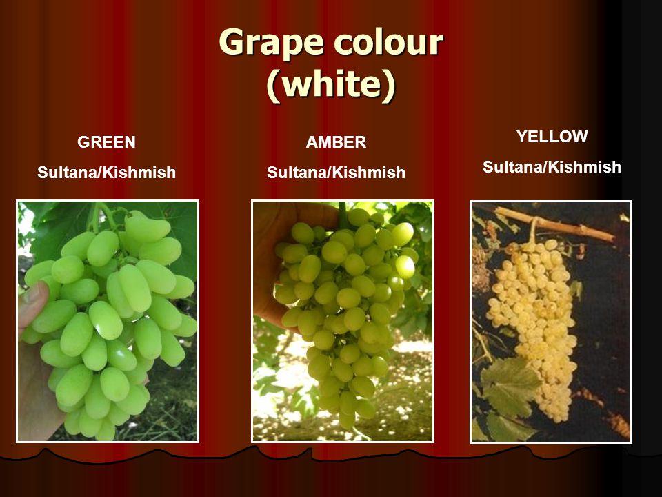 Grape colour (white) YELLOW Sultana/Kishmish GREEN Sultana/Kishmish