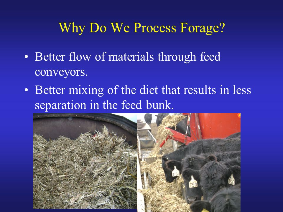 Why Do We Process Forage