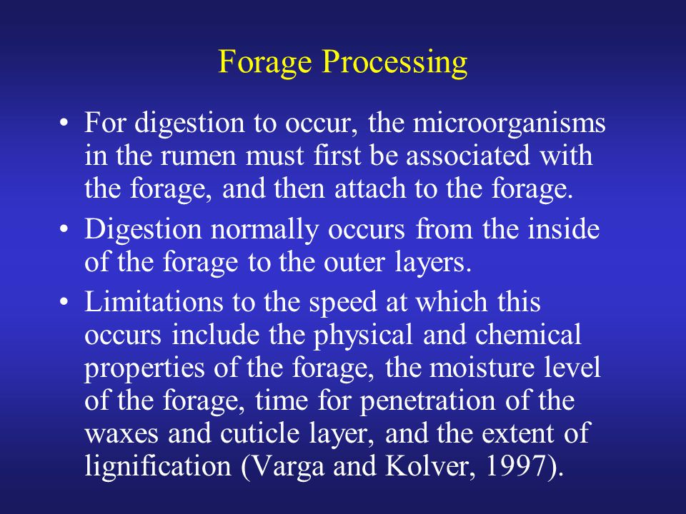 Forage Processing For digestion to occur, the microorganisms in the rumen must first be associated with the forage, and then attach to the forage.
