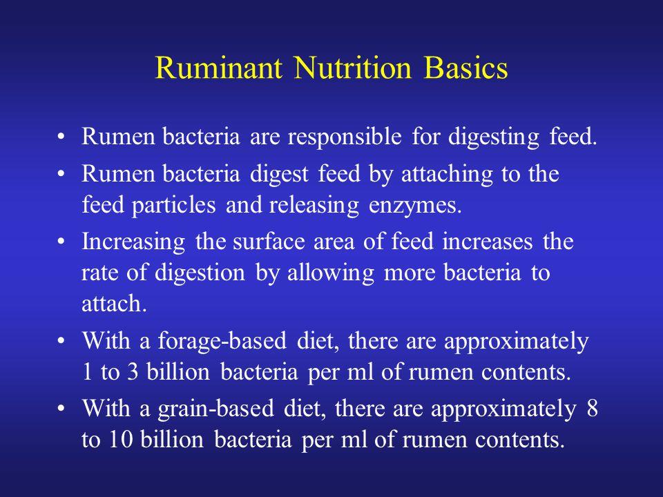 Ruminant Nutrition Basics