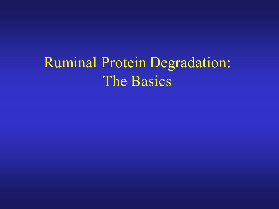 Ruminal Protein Degradation: The Basics