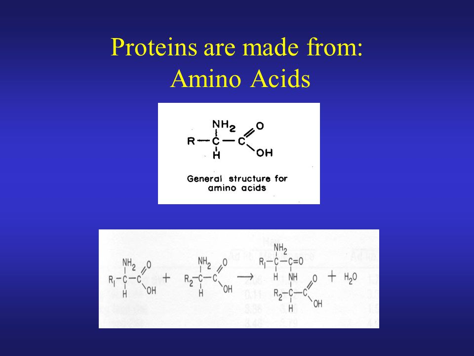 Proteins are made from: Amino Acids