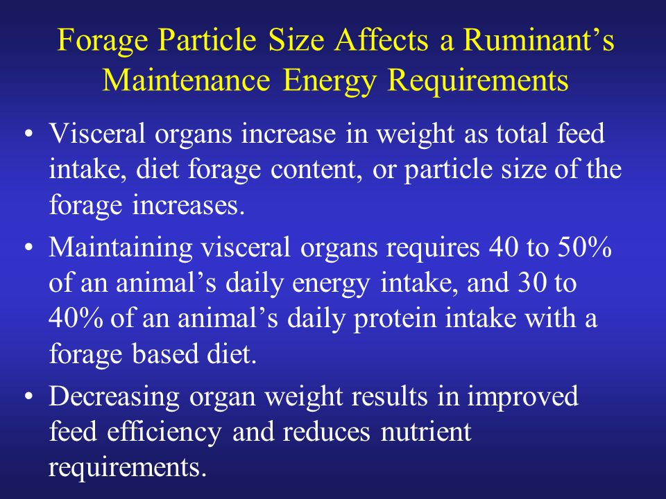 Forage Particle Size Affects a Ruminant's Maintenance Energy Requirements