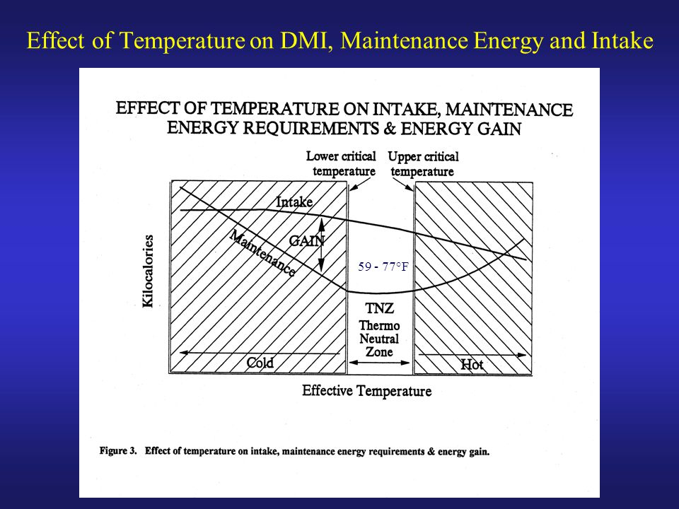 Effect of Temperature on DMI, Maintenance Energy and Intake