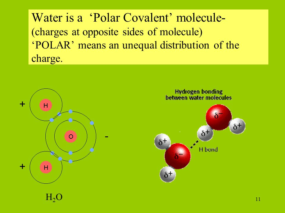 Water is a 'Polar Covalent' molecule- (charges at opposite sides of molecule) 'POLAR' means an unequal distribution of the charge.