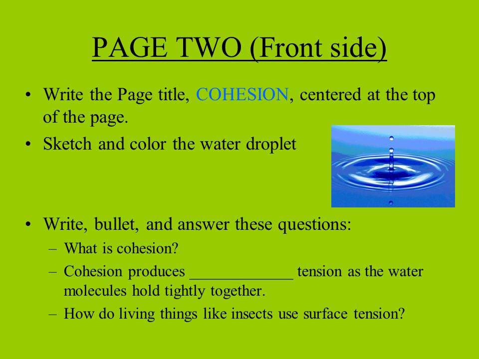 PAGE TWO (Front side) Write the Page title, COHESION, centered at the top of the page. Sketch and color the water droplet.